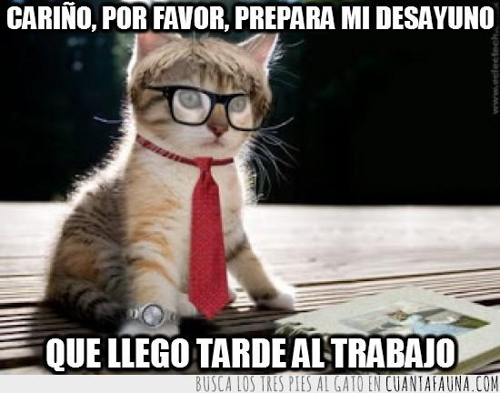 corbata,gafas,Gato,reloj,tarde,trabajo