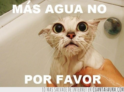 agua,bañera,baño,ducha,Gato,no mas