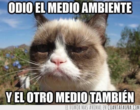 enfadado,gato gruñón,grumpy cat,medio ambiente,odiar