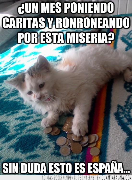dinero,españa,euros,gata loca,miseria,monedas,sueldo