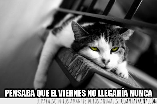 aburrimiento,blanco y negro,cansancio,gato,ojos amarillos