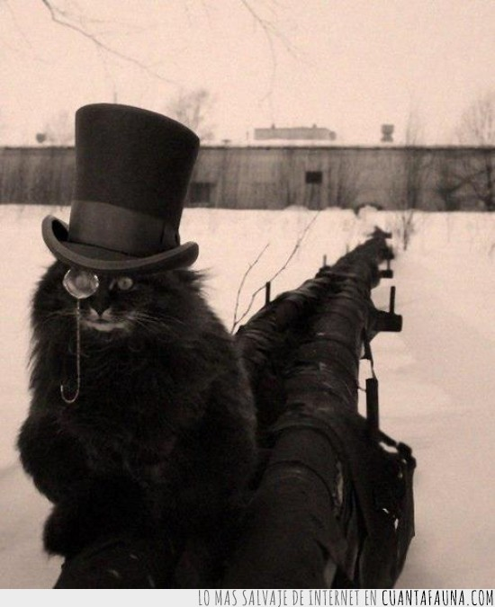 feel like a sir,Gato,monoculo,sir,sombrero,tuberia