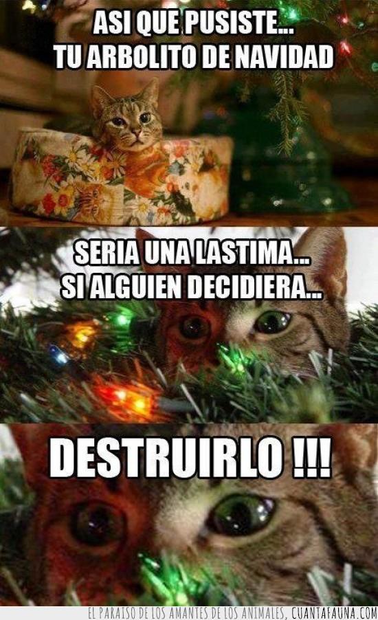 abeto,arbol,arbolito,destruir,felices fiestas a todos,gato,navidad