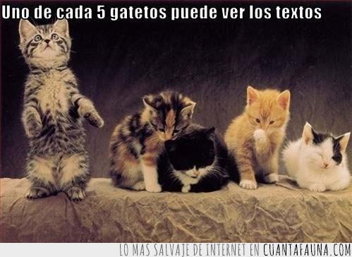gatitos,texto,textos,ver