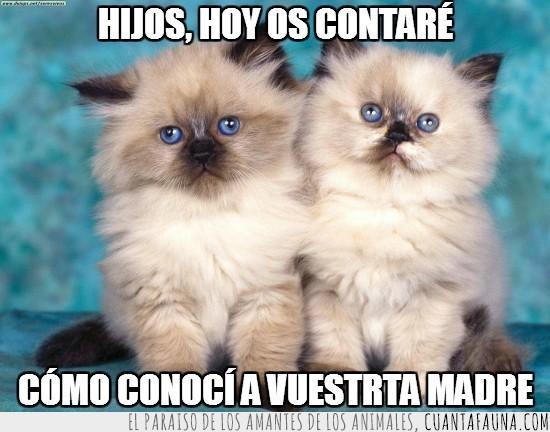CCAVM,como conoci a vuestra madre,gatitos adorables,gatos,hermanos,HIMYM,pareja,serie