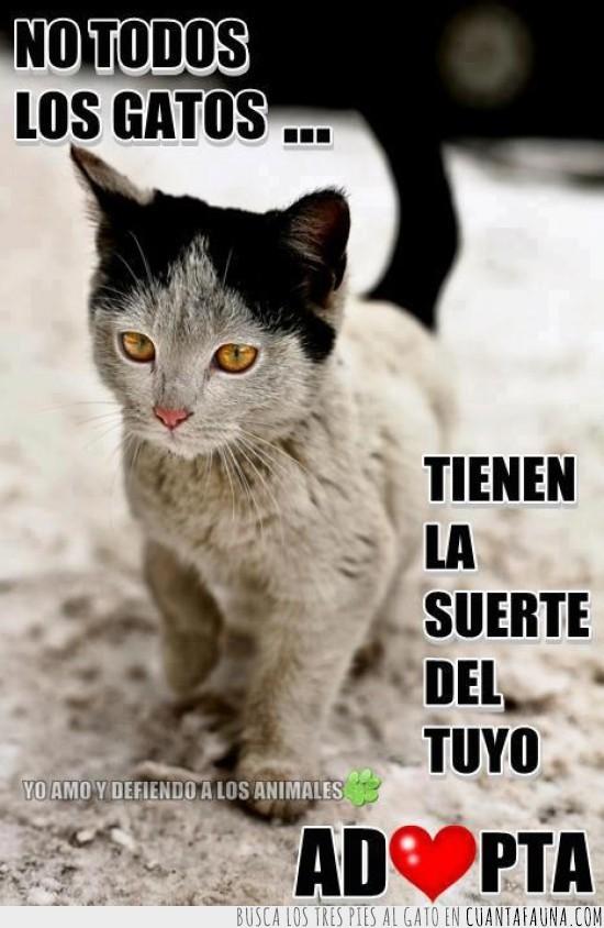 adopcion,adoptar,callejero,gato,protectoras de animales,suerte