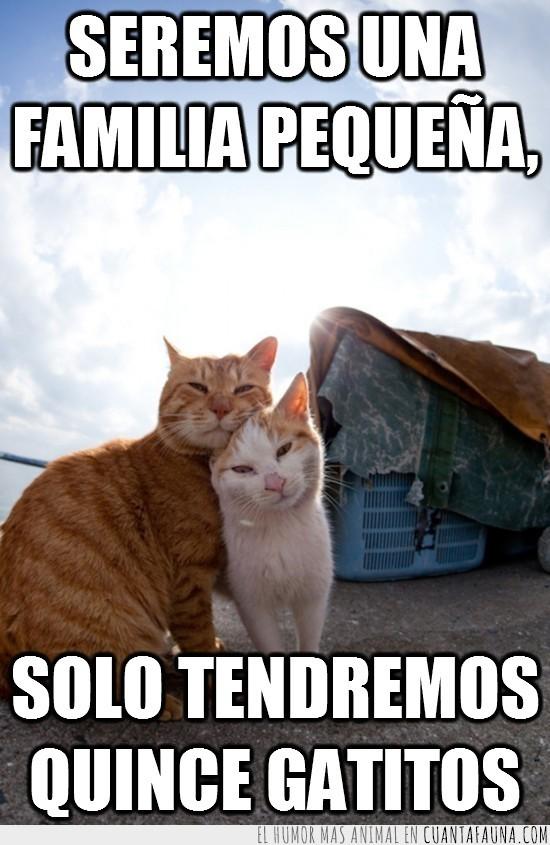 amor,familia pequeña,gato,pareja,quince gatitos