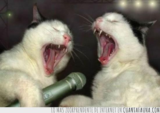 cantar,champions,gatos,karaoke,microfono