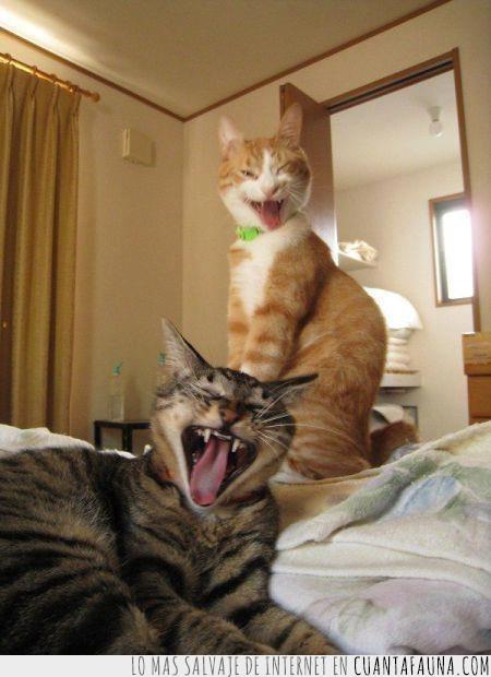 cachondeo,cama,despertar,gato,ir a trabajar,risas