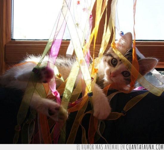 confeti,gato,seda,serpentinas,tiras de tela,ventana