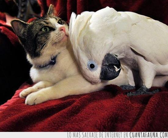 cacatua blanca,gato,papagayo,sesion fotografica,toalla roja