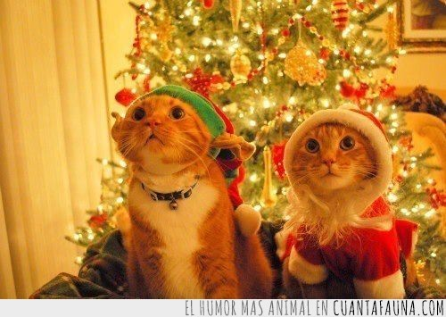 arbol,emocion,gato,ilusion,luces,navidad,regalos