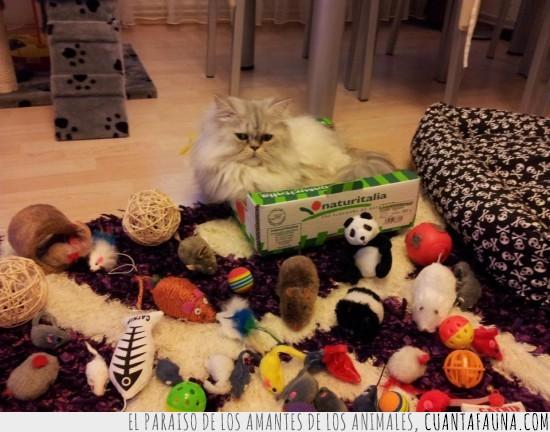 alfombra,caja,cojin,gatos,jugar,juguetes,regalos