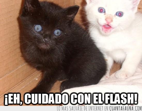 cuidado,flash,gato blanco,gato negro,ojos rojos