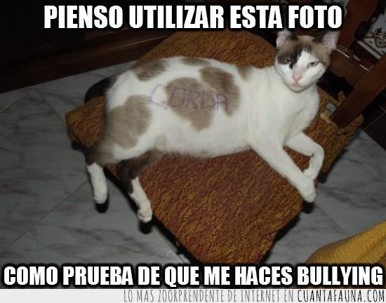 bullying,gata,gorda,prueba,silla