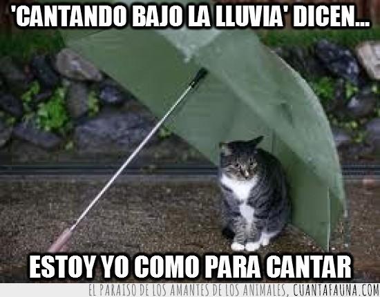 cantando bajo la lluvia,Gato,llover,mojarse,paraguas