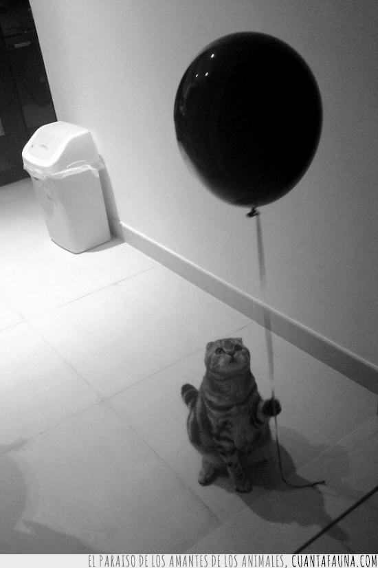 blanco y negro,Gato,Globo,Triste