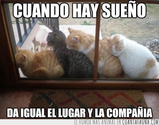 durmiendo,en cadena,fila,gatos,juntos,trenecito,ventana