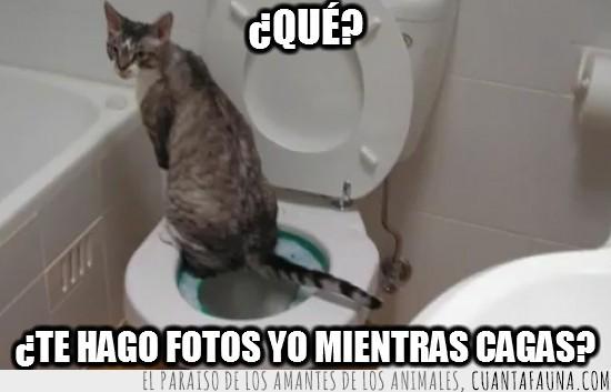 cagar,gato,lavabo,mear,mierda,retrete,wc