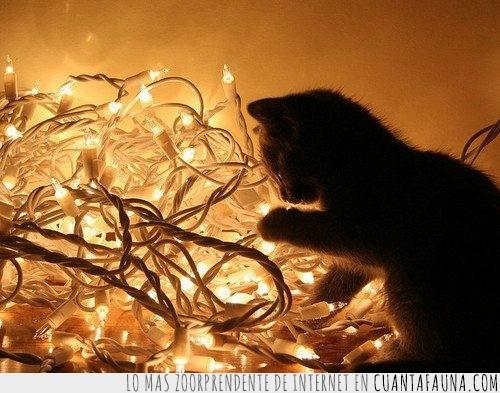 gato,lucecitas,luces,navidad,nudos