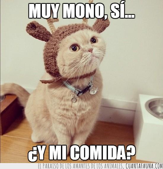 dadme mi comida,disfraz,gato reno,mono,navidad