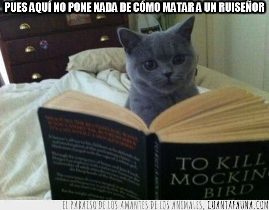 defraudado,engañado,gato,lector,lectura,leer,libro,matar a un ruiseñor,to kill a mockingbird