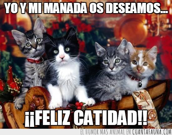 catidad,desar,deseamos,felices,gato,manada,navidad