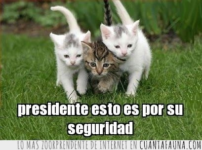 escoltar,gatos,guardaespaldas,humor,presidente