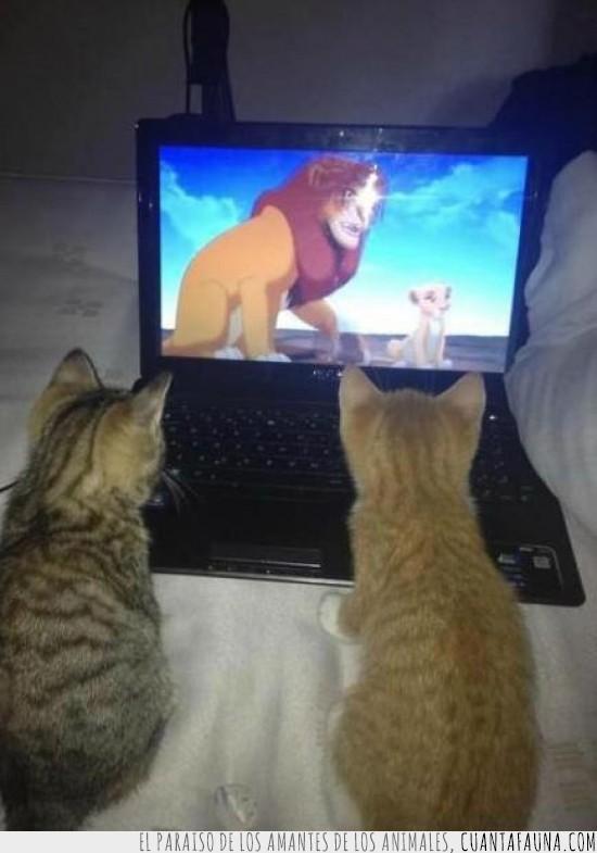 cachorros,el rey leon,laptop,pelicula favorita,portatil