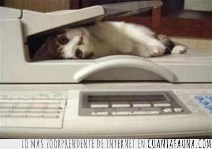 clones,ejercito,fotocopiadora,gato,oficina