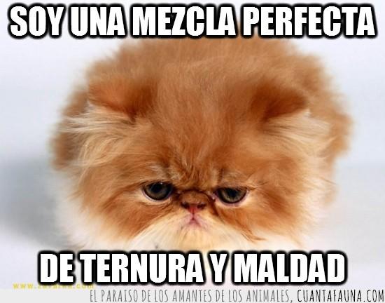 cachorro,gato,maldad,mezcla perfecta,mirada,ternura