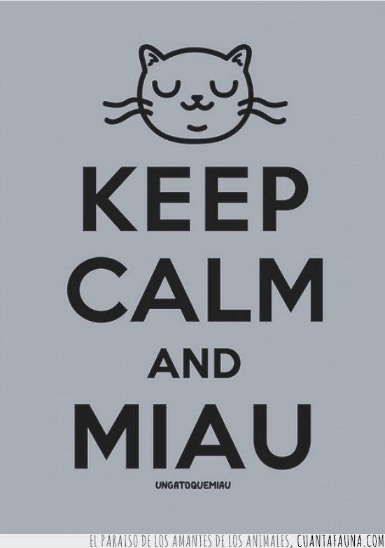 gato,keep calm and miau,miau,palabras,sabias,sabias palabras
