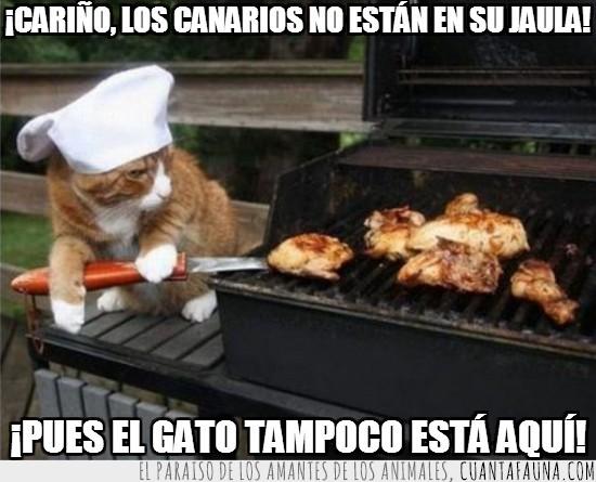 barbacoa,canarios,carne a la brasa,chef,cocinero,gato,jardin