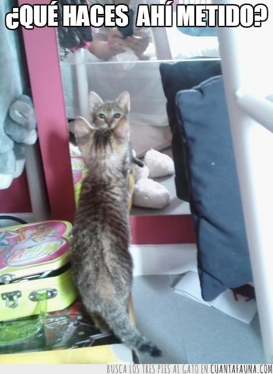 espejo,gato,no entender,pregunta