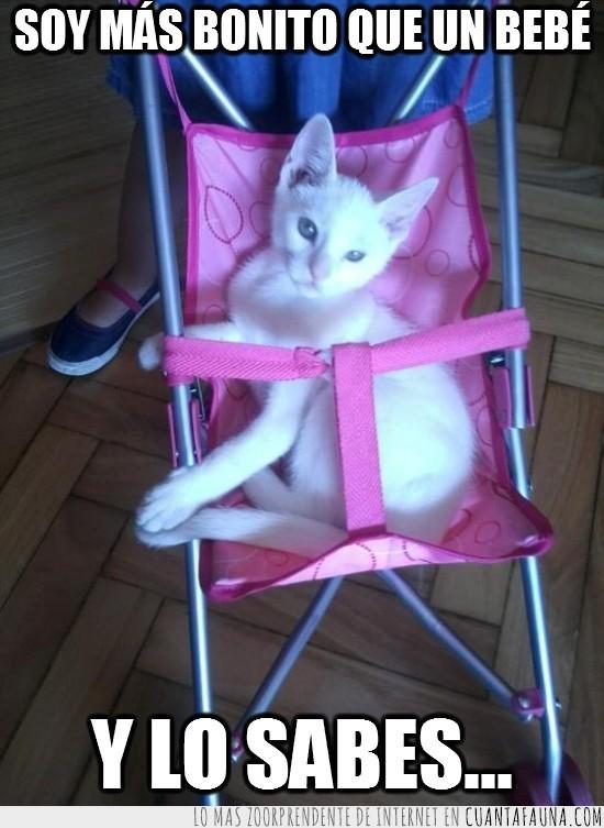 blanco,carrito de bebe,montado,rosa,soy mas bonito,y lo sabes
