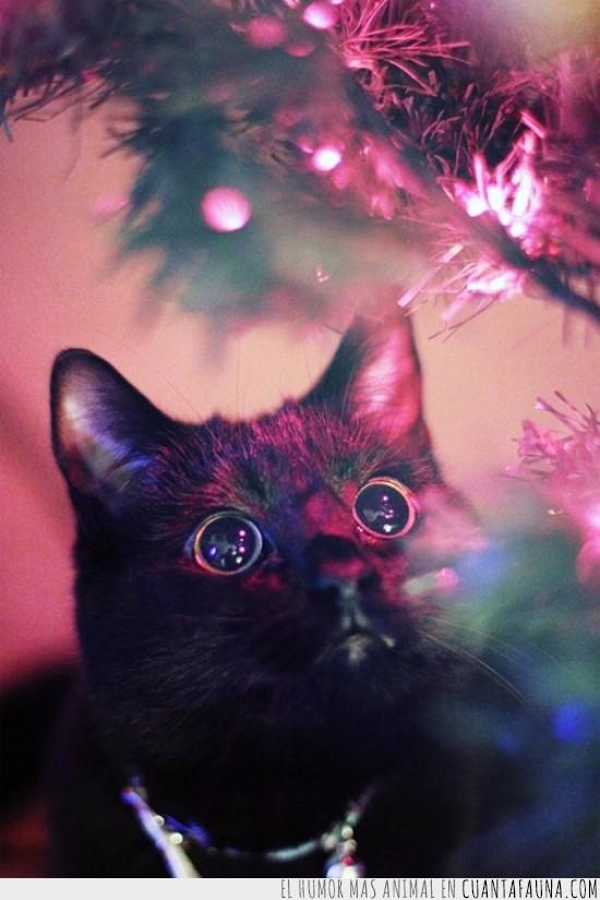 árbol de navidad,embobado,flipando,flipar,luz