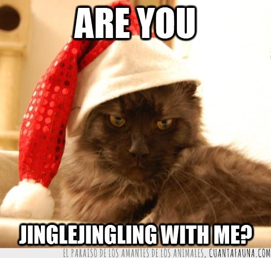 gato,gorrito,klaus,navidad,navideño,papa noel,santa claus