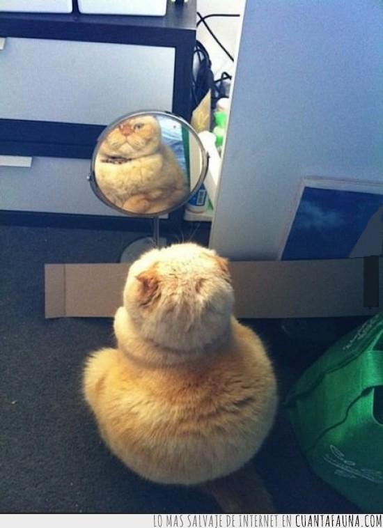 espejo,gato,gordo,mirarse
