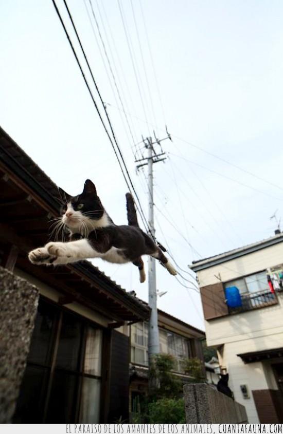 agilidad,calidad,fotografia,gato,parkour,salto