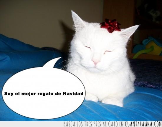 gato blanco,lacito,mejor,muy blanco,Navidad,regalo