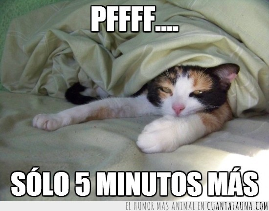 cansado,dormir,minutos,muy temprano,sobado,zzzz