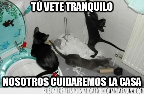 a su paso,baño,destrozar,destruccion,gatos,lavabo,todo