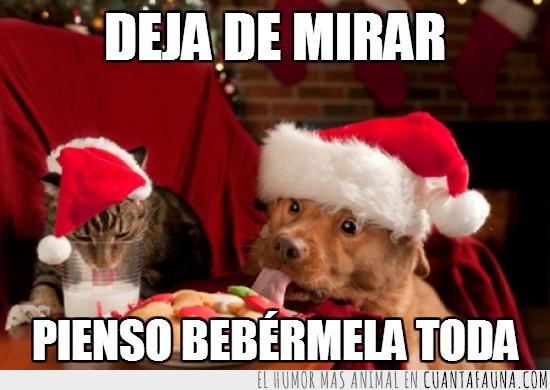 envidiosa,gato,leche,lengua,mirada,navidad
