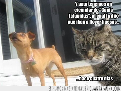 canis estupidus,crédulo,gato,gatroll,llover huesos,mentira,perro