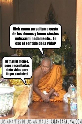 aprendiz,lama,maestro,monje,sentido de la vida,tibetano