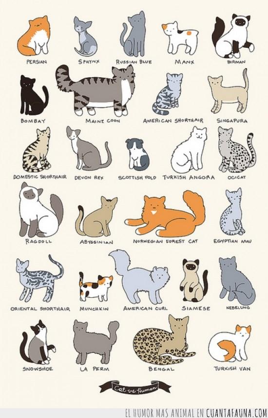 comic,dibujitos,gatos,razas,tipos