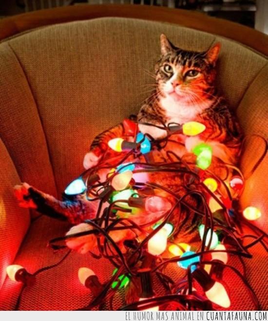 Gato,imposible,lio,luces,navidad,nudos