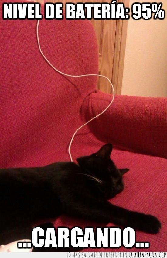 cable,cargador,cargando,conectado,durmiendo,enchufado,gato,sofa,tumbado
