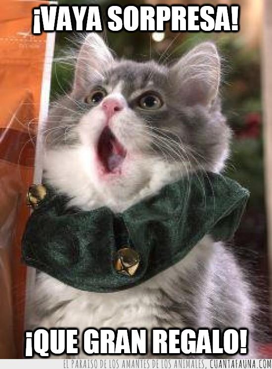 emocion,gato,navidad,regalo,sorpresa