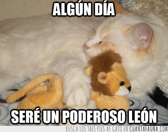 abrazado,dormido,dormir,gato,leon,peluche